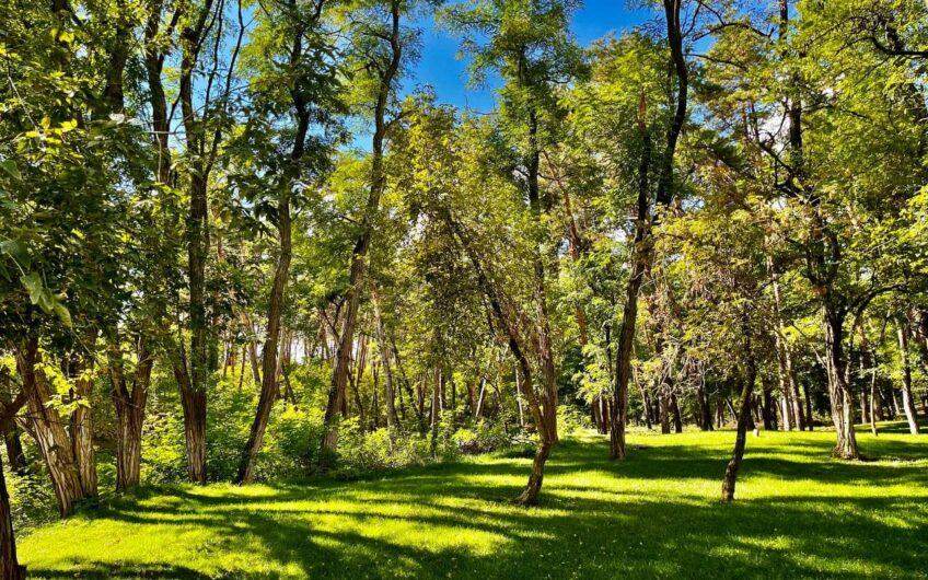 Участок Обуховка напротив соснового леса